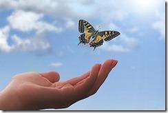 Schmetterling mit Hand